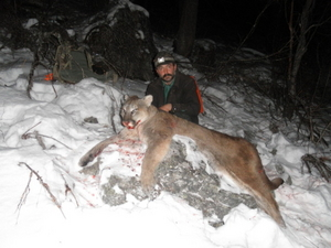 Mountain lion hunts for sale