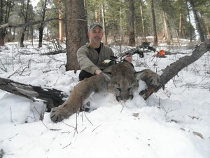 Archery mountain lion