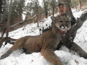 Montana mountain lion hunt